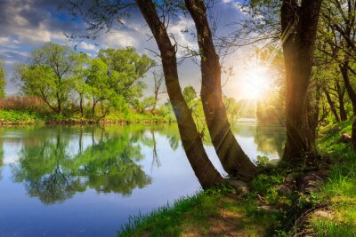 Sticker Wald Fluss mit Steinen und Gras bei Sonnenuntergang