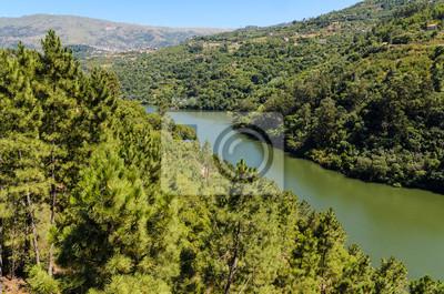 Wälder an den Ufern des Flusses Douro, Resende, Portugal