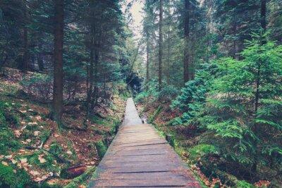Sticker Wanderweg in Waldlandschaft