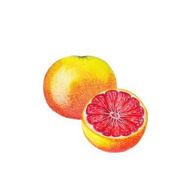 Sticker Wasserfarbe Grapefruit