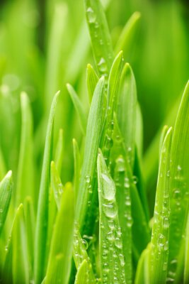 Sticker Wassertropfen auf Gras