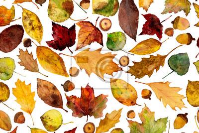 watercolor acorns and fall leaves