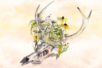 watercolor background deer skull with summer wildflowers