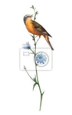 Watercolor bird on the flower