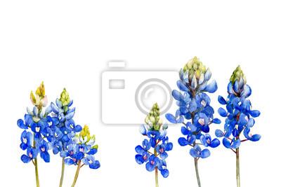 watercolor bluebonnets wildflowers