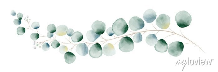 Sticker Watercolor green eucalyptus leaves and branches