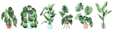 Sticker Watercolor image with tropical leaves and leaves of indoor plants. Home plant in pots. Greenery. Juicy. Floral design element. Perfect for invitations, cards, prints, posters.