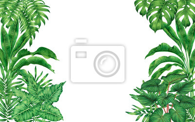 Watercolor painting frame tropical leaves coconut,palm,green leaf isolated on white background.Watercolor hand drawn illustration tropical exotic leaf for wallpaper,backdrop,card,vintage Hawaii style.