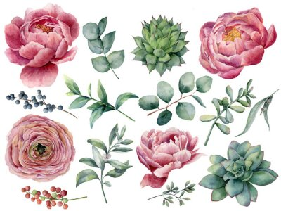 Sticker Watercolor peony, succulent and ranunculus floral set. Hand painted red and blue berry, eucalyptus leaves isolated on white background. Illustration for design, print.