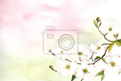 watercolor pink and green ombre wash background texture with dogwood flower