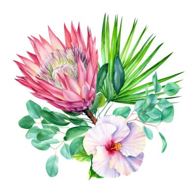 Sticker Watercolor protea flower, isolated on white background. Botanical illustration. Hand painted watercolor.