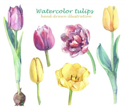 Sticker Watercolor set of yellow, violet and pink tulips.