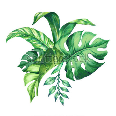 Sticker watercolor tropical green leaves, isolated on white background
