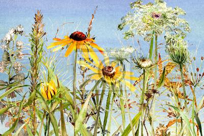 watercolor wildflower meadow