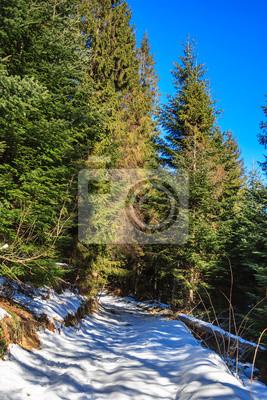 Weg zum Nadelwald am Wintertag mit Schnee bedeckten