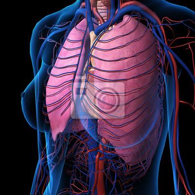 Weibliche brust-x-ray mit lunge anatomie notebook-sticker ...