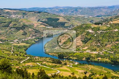 Weinberge an den Ufern des Douro, Portugal