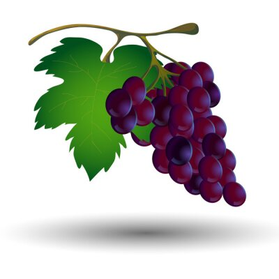 Sticker Weintraube mit einem Blatt auf einem weißen Hintergrund