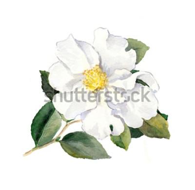 Sticker Weiße Blume. Aquarell botanische Illustration