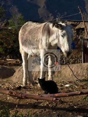 Sticker Weiße Esel und schwarze Katze