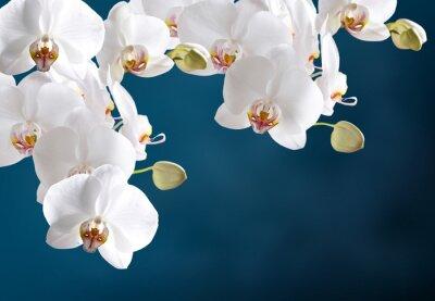 Sticker Weiße Orchidee