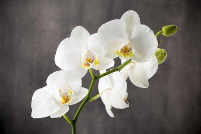 Sticker Weiße Orchidee auf dem grauen Hintergrund.