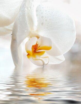 Sticker Weiße Orchidee. Closeup mit Reflexion in Wasser.