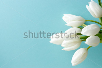 Sticker weiße Tulpe