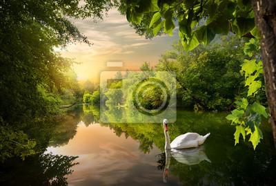 Weißer Schwan auf einem Teich