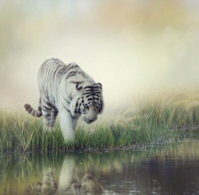 Sticker Weißer Tiger