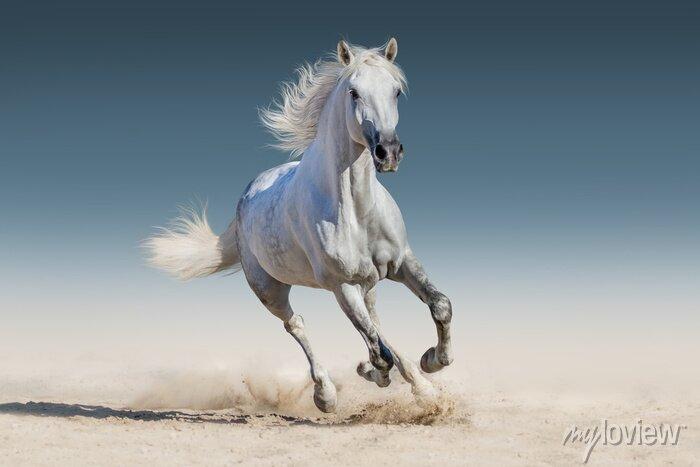 Sticker Weißes Pferd laufen Galopp