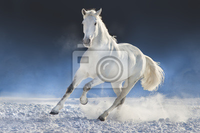 Weißes Pferd laufen im Schneefeld vor einem dunklen Hintergrund