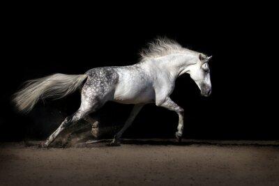 Weißes Pferd mit langen Mähne in Wüste Staub trabt