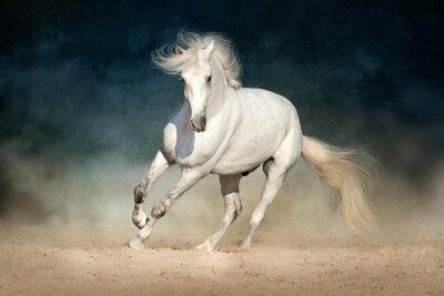 Weißes Pferd vorwärts in Staub auf dunklem Hintergrund