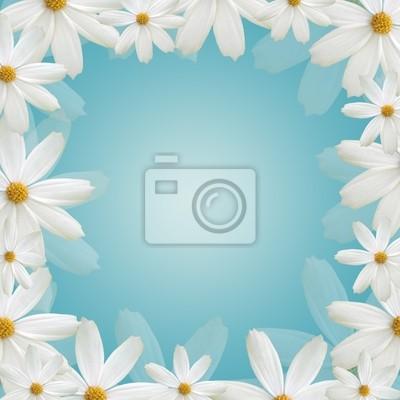 White Daisy schönen Rahmen auf blauem Hintergrund