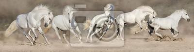 White Horse Herde laufen in Wüstenstaub. Panorama für Web