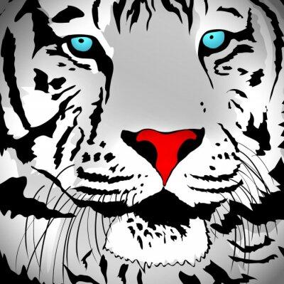 Sticker White Tiger Portrait