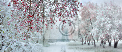 Sticker Winter city park at snowfall with red wild apple trees