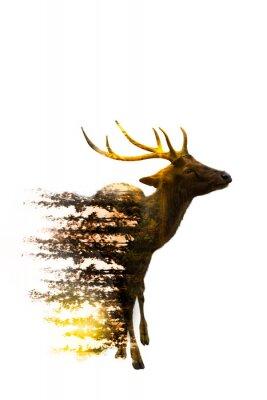 Sticker World Wildlife Day Environmental and Wildlife Concepts
