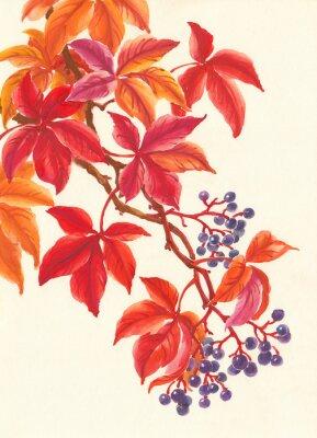 Sticker Дикий виноград осенью, красные листья и ягоды, живопись.