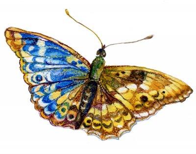 Sticker Бабочка акварель, графика, насекомое, рисунок,