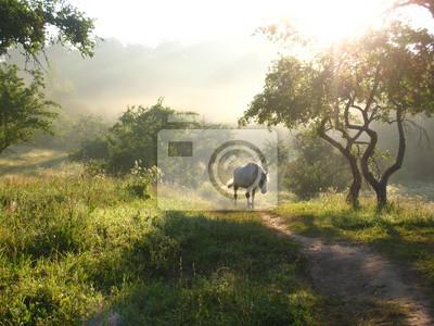 белая лошадь в тумане на рассвете