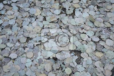 текстура сухие листья