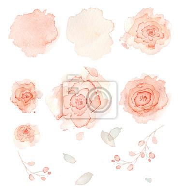 Цветы розы акварель
