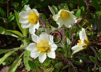 белый весенний цветок