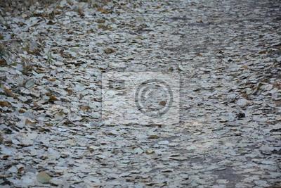 сухие листья фон