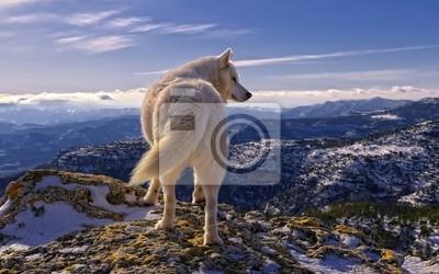Sticker Волк