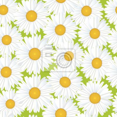 Sticker Drucken, бесшовный цветочный фон из ромашек