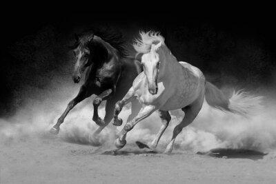 Zwei andalusischen Pferd in Wüste Staub gegen dunklen Hintergrund