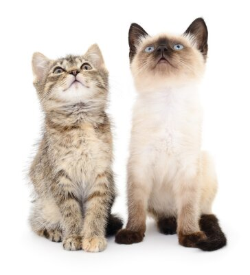 Sticker Zwei kleine Kätzchen
